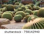 Green Round Cactus