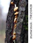 autumn forest. wood mushrooms... | Shutterstock . vector #758153428