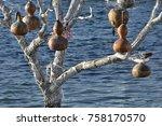 pumpkins on tree | Shutterstock . vector #758170570