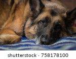 natural light portrait of...   Shutterstock . vector #758178100