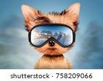 funny dog wearing ski goggles.... | Shutterstock . vector #758209066