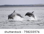bottlenose dolphins  tursiops... | Shutterstock . vector #758233576