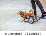 walking the dog on the street... | Shutterstock . vector #758285854