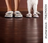 woman and a cat in slippers.... | Shutterstock . vector #758290054