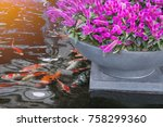 Small photo of Beautiful flowers and Koi fish in the garden. Tokyo, Japan. Toned image.