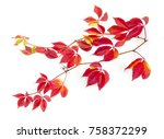 branches of maiden grapes ... | Shutterstock . vector #758372299