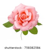 beautiful rose isolated on... | Shutterstock . vector #758382586