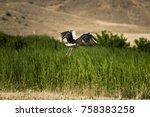 flying stork stork starts to... | Shutterstock . vector #758383258