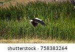 flying stork stork starts to... | Shutterstock . vector #758383264