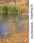 life of autumn lake | Shutterstock . vector #758399674