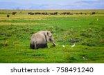 elephants in swamps surrounded...   Shutterstock . vector #758491240