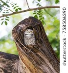 little owl peeping out of the... | Shutterstock . vector #758506390