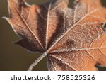artistic nature abstract of dry ... | Shutterstock . vector #758525326