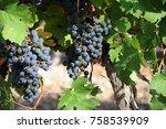 vines  grapes  wine box  costa... | Shutterstock . vector #758539909
