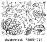 vegetable  illustration of hand ...   Shutterstock .eps vector #758554714