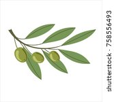 branch of green olives with... | Shutterstock . vector #758556493