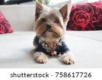 Stock photo cute small dog 758617726