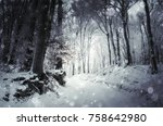 snow falling in cold forest in...   Shutterstock . vector #758642980