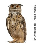 Stock photo portrait of eurasian eagle owl bubo bubo a species of eagle owl standing in front of white 758670583