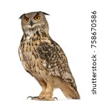 Stock photo portrait of eurasian eagle owl bubo bubo a species of eagle owl standing in front of white 758670586