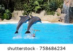 dolphins in a dolphinarium | Shutterstock . vector #758686234