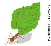 Leaf Cutter Ant Vector. Red An...
