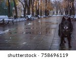 Lonely Abandoned Stray Dog On A ...