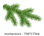 spruce branch isolated on white ...