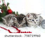 Stock photo kittens lie under the christmas tree kittens are sleeping in anticipation of the holiday 758719960