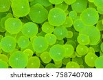 green leaves background   the... | Shutterstock . vector #758740708