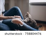 Stock photo cute funny cat playing with woman hands young woman sitting in bed at home close to the big window 758804476
