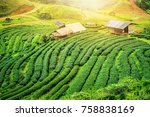 Tea Plantation On Hill At Doi...