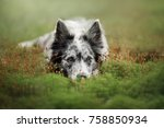 the dog laid her head down.... | Shutterstock . vector #758850934