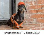 dachshund dog  black and tan ... | Shutterstock . vector #758860210