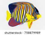 royal angelfish 3d illustration ... | Shutterstock . vector #758879989