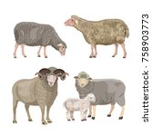 set of sheep on white... | Shutterstock .eps vector #758903773