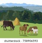 Cattle Grazing In A Meadow....