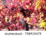 grapes in autumn | Shutterstock . vector #758915479