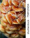 autumn forest. wood mushrooms.... | Shutterstock . vector #758919454