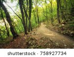 beautiful forest. pathway in... | Shutterstock . vector #758927734