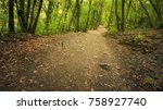 beautiful forest. pathway in... | Shutterstock . vector #758927740