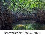 mysterious mangrove forest ... | Shutterstock . vector #758967898