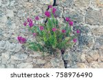 Plant With Pink Flowers In The...