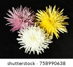 three spider mums | Shutterstock . vector #758990638