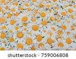 still life of white daisies.... | Shutterstock . vector #759006808