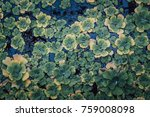 water lily background texture | Shutterstock . vector #759008098