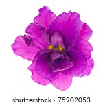 Stock photo macro photo of lilac violet isolated flower 75902053