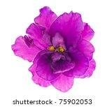 Macro Photo Of Lilac Violet...