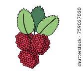 delicious raspberries fruit | Shutterstock .eps vector #759037030