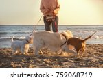 Stock photo dog walker on the beach at sunset in a beautiful happy landscape 759068719